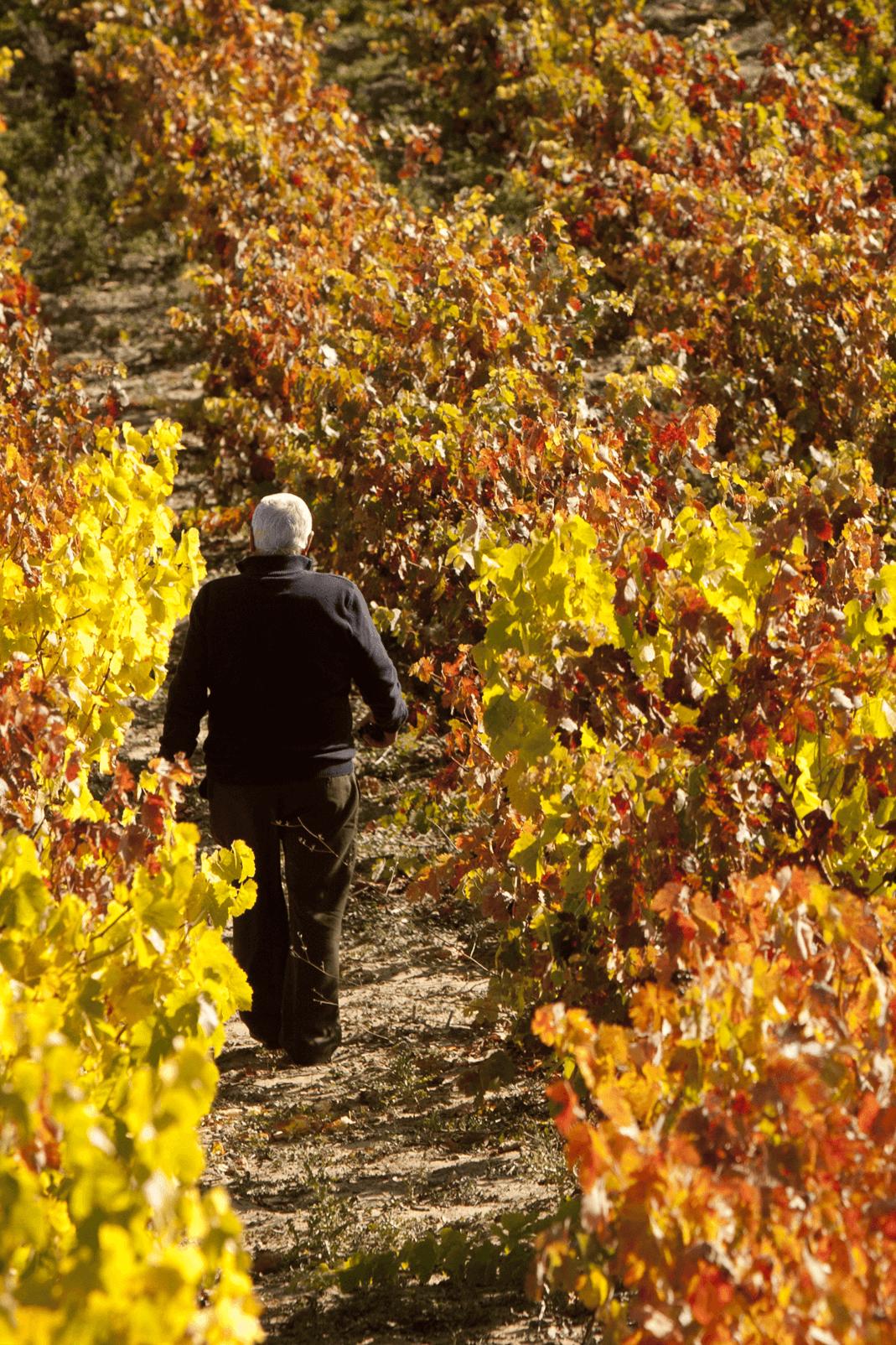 bodegas taron vinos la rioja vendimia 05 vertical