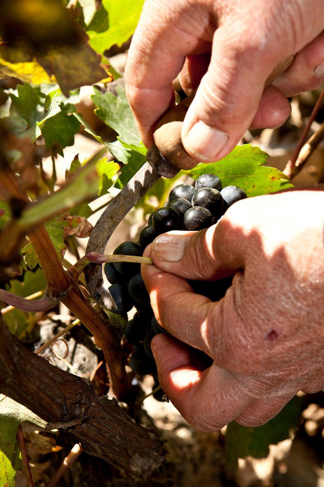 bodegas taron vinos la rioja vendimia 05