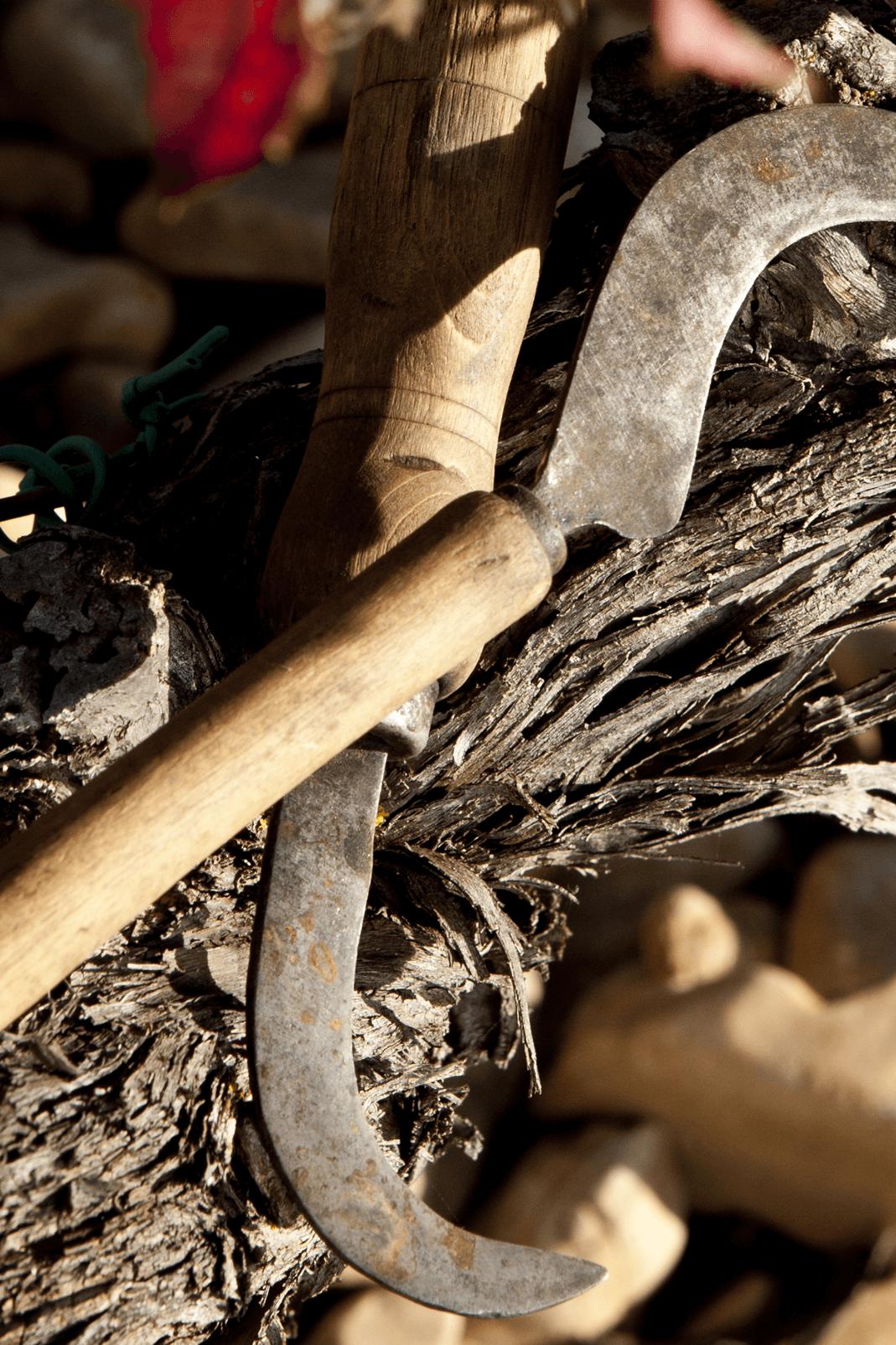 Vendimia bodegas taron vinos la rioja herramientas