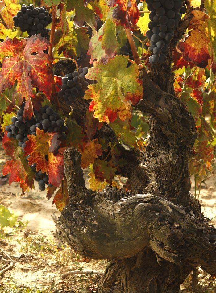 enoturismo en La Rioja visita bodegas