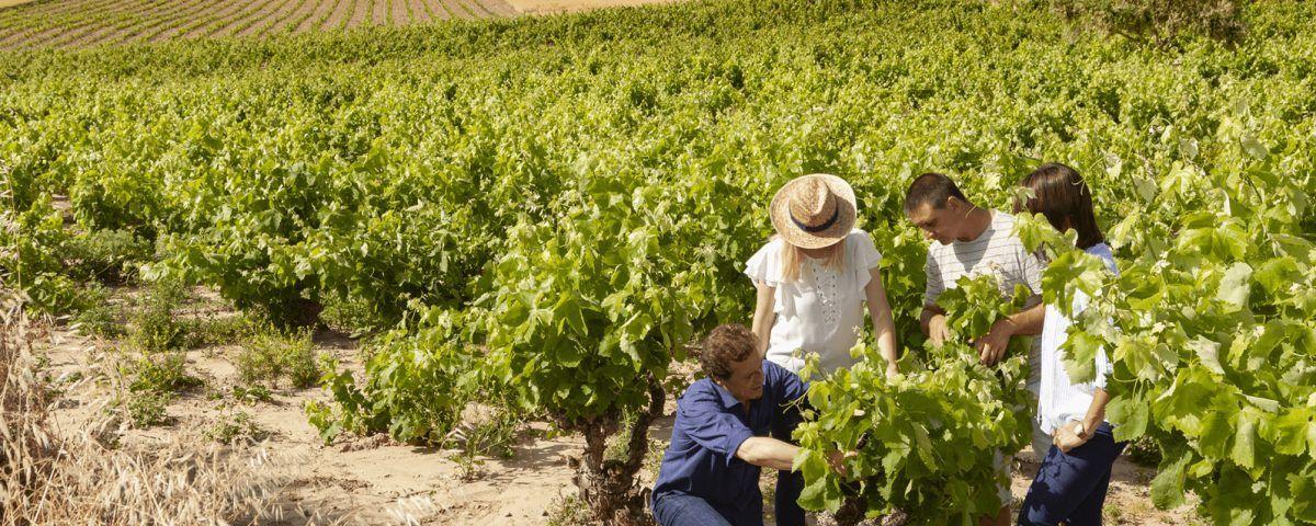 Vinos de rioja alta Bodegas taron enoturismo