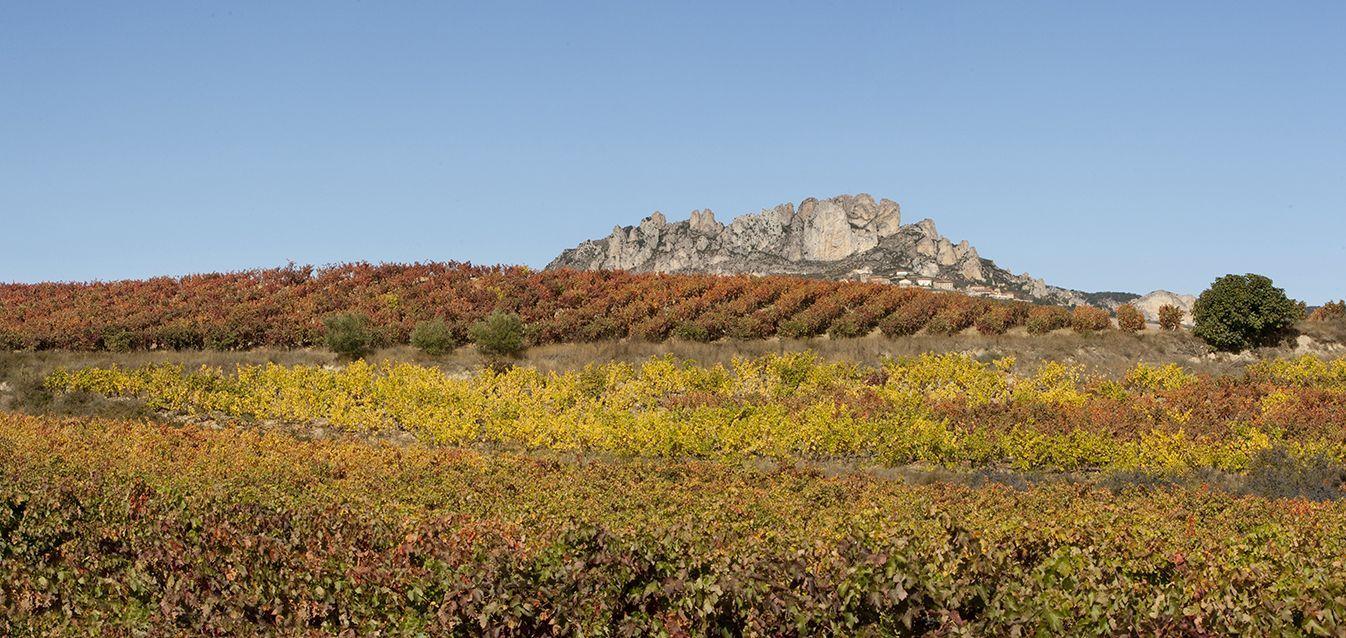 Visitar La Rioja Territorio Tarón