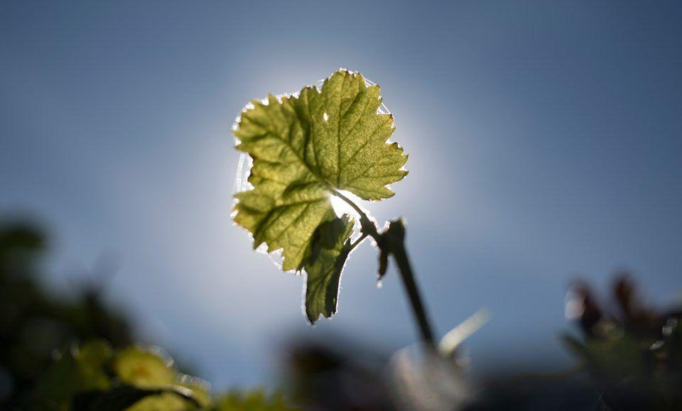 Vinos-de-rioja-alta-Bodegas-taron-Año-2021